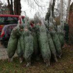 Die Firma Hüpeden & Co. spendete nicht zum ersten Mal Weihnachtsbäume. Ein schöner Teil der Bäume, die in Hamburg gespendet wurden, gingen an die Stiftung. Danke & herzlichen Glückwunsch zum 98. Geburtstag!