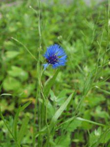 die Kita Am Gleisdreieck in Billwerder (eine symbolische Wildblume)